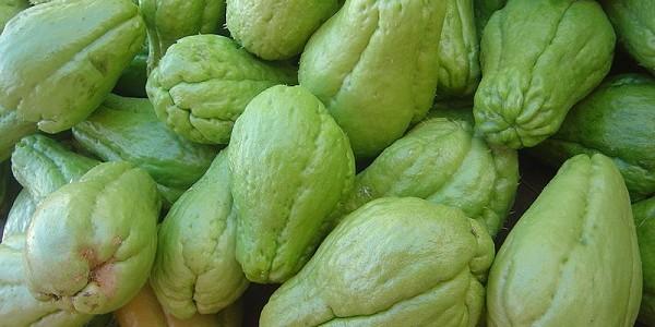 Zucchina spinosa